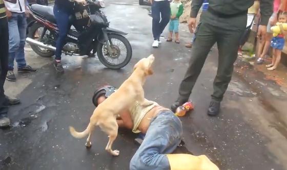 【感動動画】事故にあった主人のことを必死に守る犬の姿に超感動!!