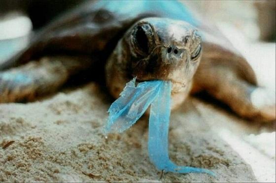 『海に捨てられたごみはどのくらいの時間で分解されるのか』をまとめたデータに驚愕・・・