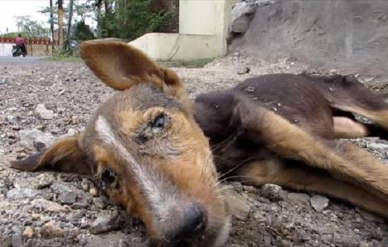 瀕死状態にもかかわらず最後の力で尻尾を振る犬が保護された結果...