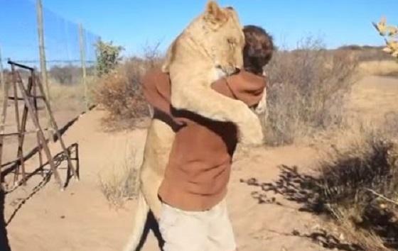 幼い頃に救ったライオンとの久々の再会を映した動画に世界中が感動!!