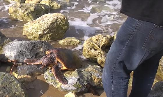 海岸でくつろいでいると思ったウミガメに近づいてみると悲惨な状況だった...