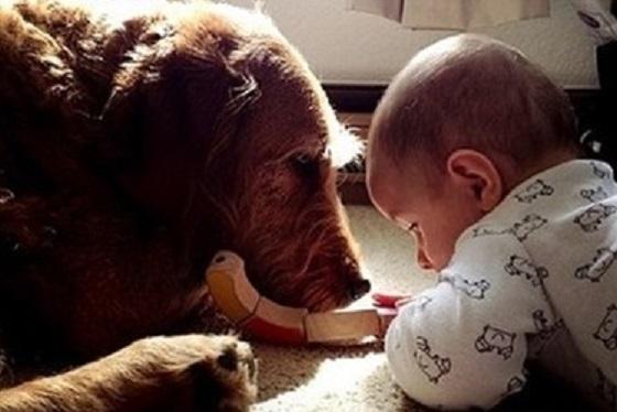 問題行動がある犬が家族の愛情のおかげで赤ちゃんの大親友になった話に超感動!!