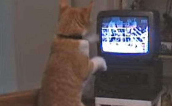 【ネコパンチ特訓中】ボクシングの映像を見ながらパンチの特訓をする猫が可愛すぎる!!