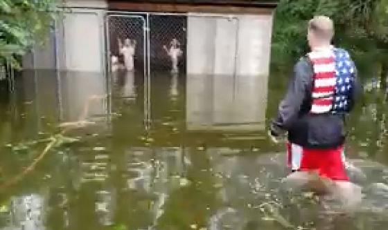 ハリケーンで逃げられなくなったイヌを救助したボランティアが世界中から賞賛の嵐!