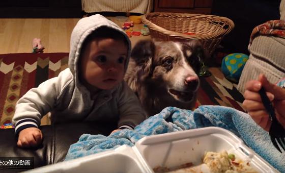 赤ちゃんに「ママ」という言葉を教えていたら、犬の方が先に覚えてしまったw