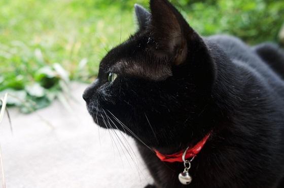 イギリスで黒猫を捨てる人が急増?!その驚愕の理由に怒りが止まらない...