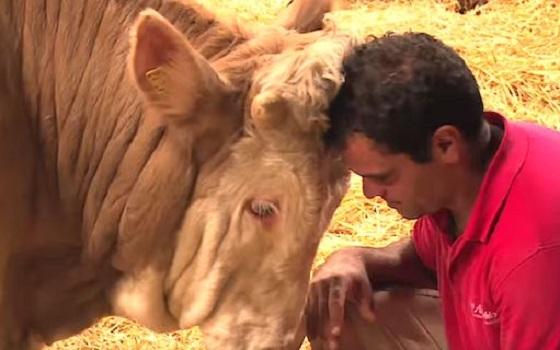 ずっと鎖で繋がれていた仔牛が解き放たれたときの行動に涙が止まらない...