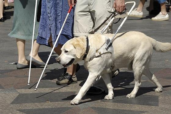 優秀な盲導犬が豹変?!そのとき見せた『本当の姿』に心打たれる...