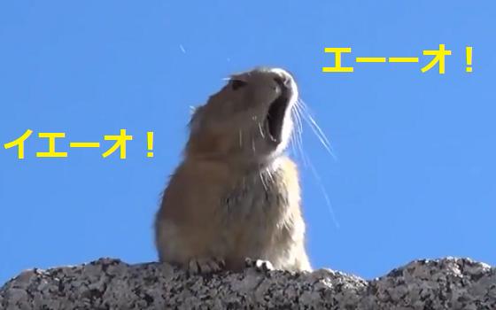『エーーーーオ!』ネズミさんがQueenの歌を大熱唱で大爆笑♪♪