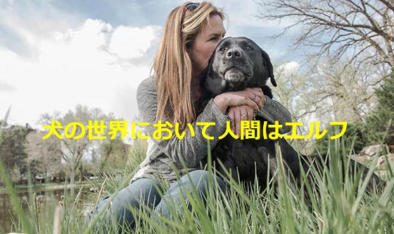 犬の気持ちになって人間について書いた「犬の世界において人間はエルフ」という詩に超感動!!