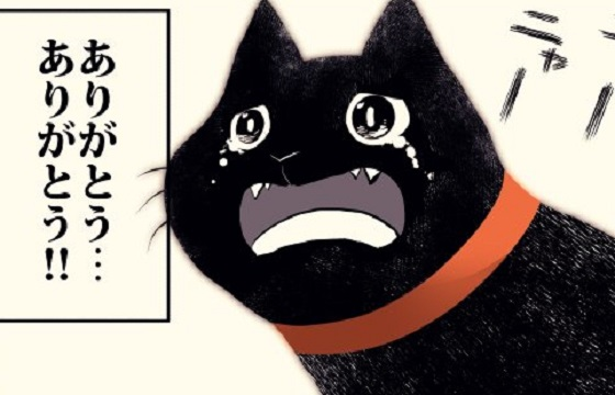 「黒猫の生涯」を描いた漫画のラストシーンに涙が止まらない...