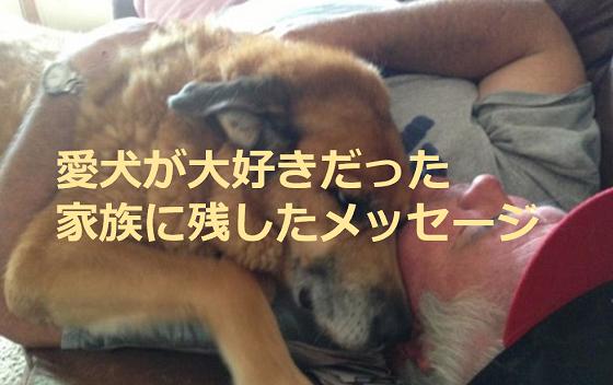 天国へ旅立った愛犬が、大好きだった家族に残した「あるメッセージ」に超感動!!
