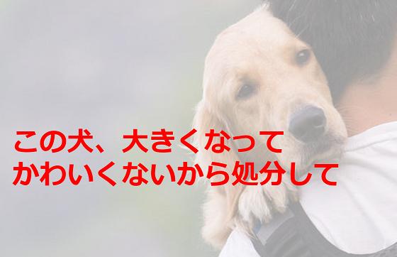 保健所に飼っている犬が大きくなった理由で処分を依頼した飼い主が...