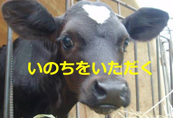 【いのちをいただく】牛のみいちゃんがお肉になるまでのお話に涙が止まらない...