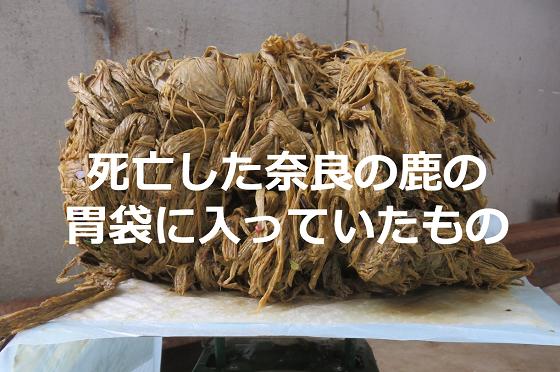 死亡した奈良の鹿の胃袋に入っていたものに心痛める...