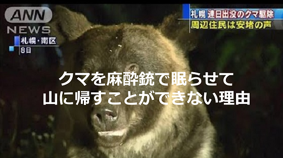 住宅街に出没したクマを麻酔銃で眠らせて山に帰すことができない理由とは...