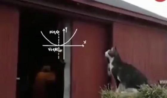 【やっぱり猫って天才w】屋根までの距離をわずかな時間で計算してジャンプしたら...