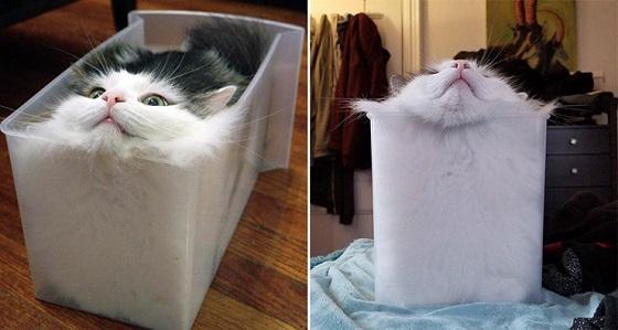 フランスの物理学者が数式を用いて検証した結果、猫は固体ではなく液体?!