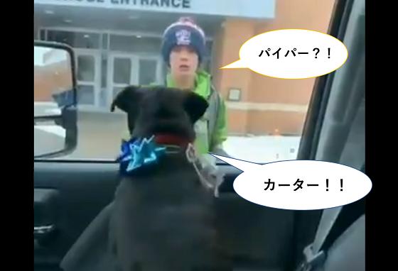 愛犬が行方不明になり塞ぎ込んでいた少年に放課後、待ち受けていたのは…