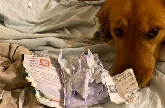 愛犬がパスポートをビリビリに破き、旅行中止になった旅先は・・・