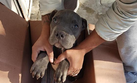 ある少年が飼い犬を子犬のおもちゃと一緒に動物保護施設の前に置き去りにした理由に胸を痛める...