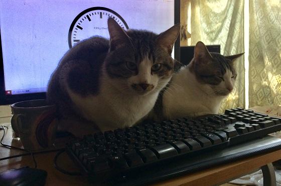 成功者続出?!テレワークを愛猫に邪魔されないための対処法にほっこりw
