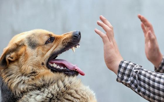 狂犬病が国内で発症!当該地域で予防接種していない犬は殺処分?!