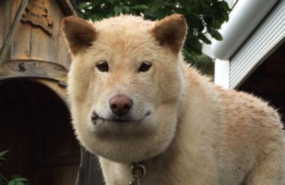 マムシに噛まれた愛犬のお弁当箱のようなフェイスラインに驚愕...
