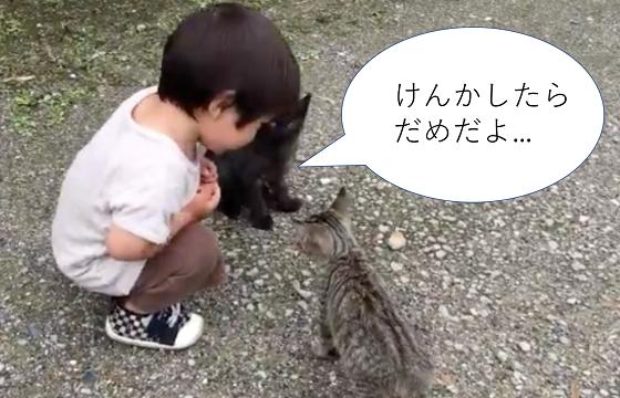"""""""けんかしたらだめだよ""""男の子が子猫たちの喧嘩の仲裁に入る動画に癒される"""