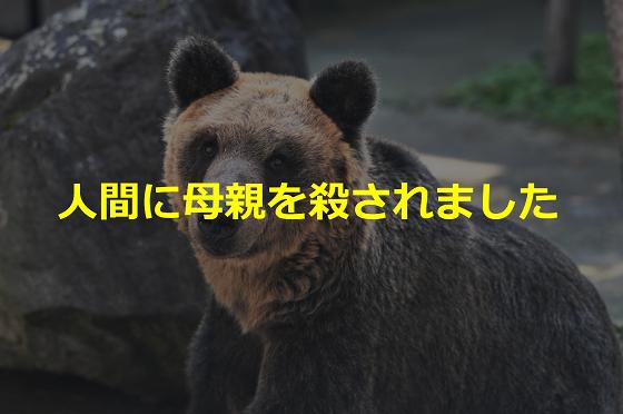"""人間に母親を殺されたヒグマの""""とんこ""""はなぜ動物園にいるの?"""