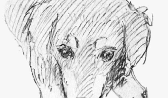 「まだ お空に行けてないの?」亡くなった愛犬の夢に涙があふれる...