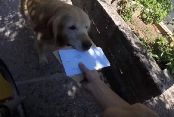 郵便屋さんをお出迎えして手紙をご主人に運んでいくワンちゃんが可愛すぎる!!