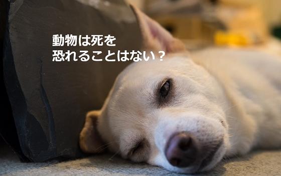 """愛犬を亡くしたときに心を救ってくれた""""獣医からの言葉""""とは..."""