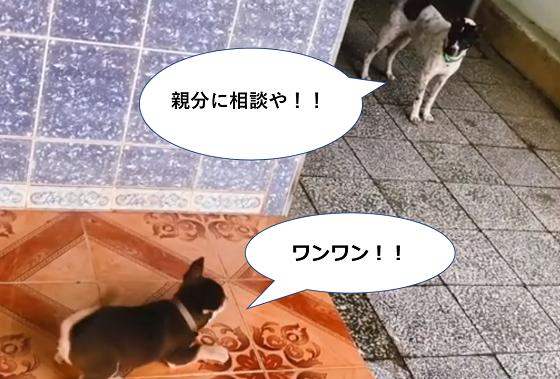ワンワンうるさい小型犬を黙らせた先輩ワンコの行動に爆笑www