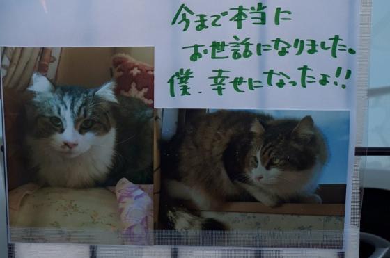 【僕のこと覚えてますか?】野良猫だった猫からのメッセージが素敵すぎる!!