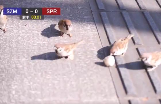 すずめが公園でサッカーをしている様子の実況中継が面白い!!