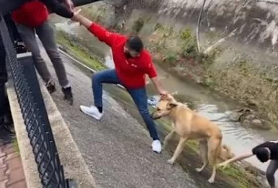 """水路に落ちてしまった""""野良犬を連携プレーで救出""""した結果..."""