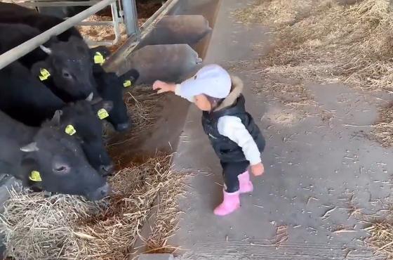 子どもが一生懸命に牛に餌をあげる動画に癒されるーw