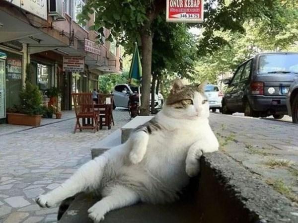 """トルコで街中から愛された猫の""""トンビリくん""""が銅像になった?!"""