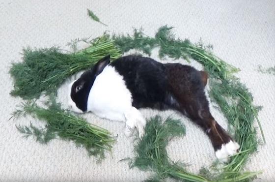 ぐっすり眠っているウサギを餌で囲んで起きた瞬間のリアクションが...