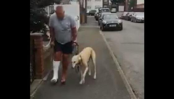 愛犬の歩き方がおかしくなったからレントゲンを撮った結果が優しさにあふれていた...